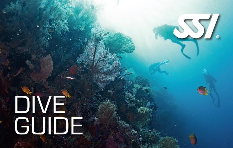 Dive Guide (non Professional)