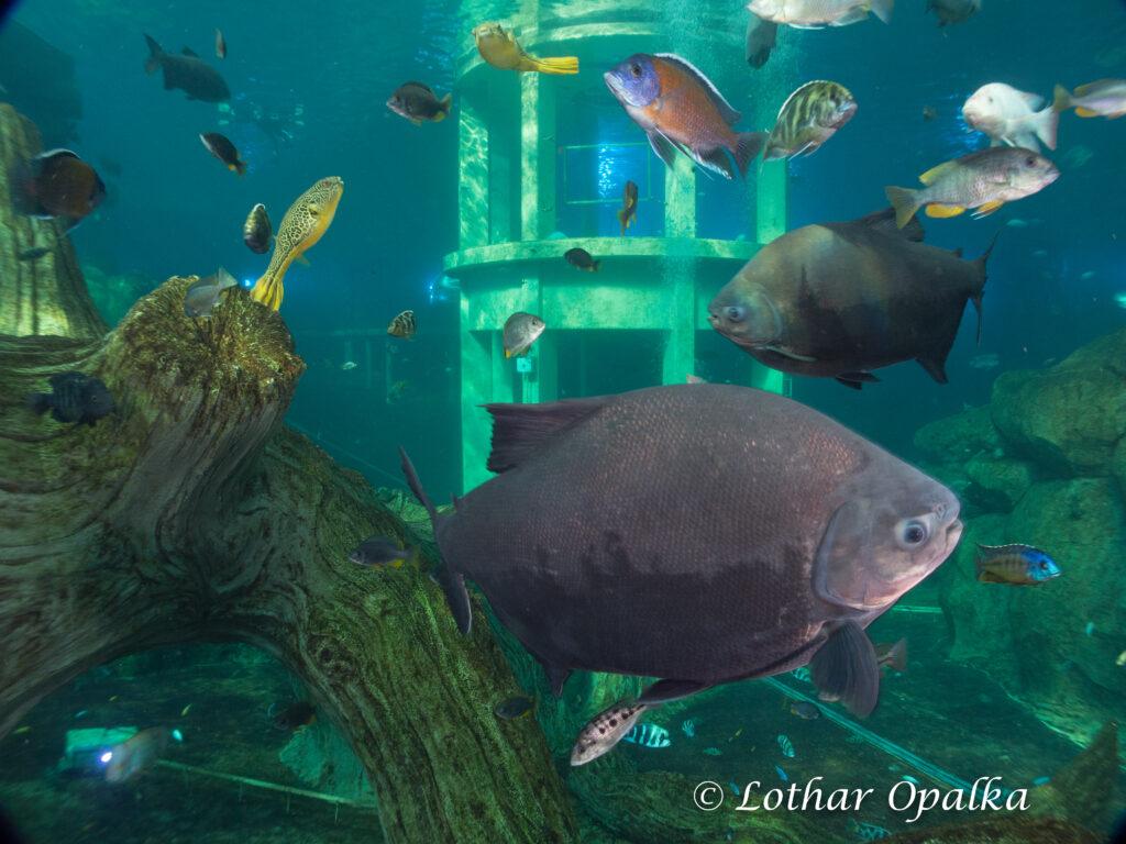 Fische im Todi Tauchzentrum