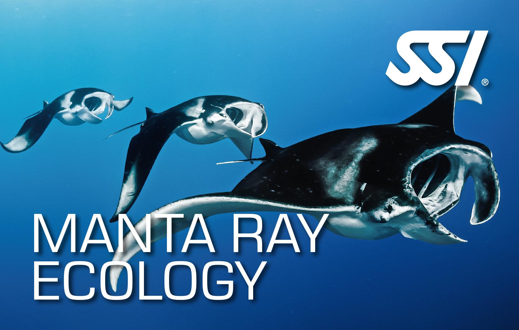 Manta Ray Ecology